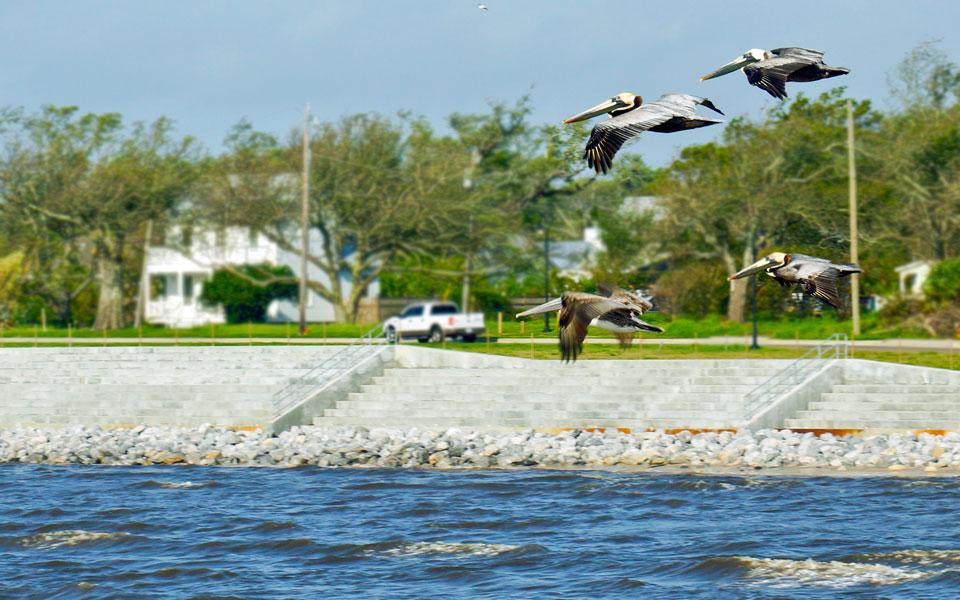 seawall-pelicans-6815-crop